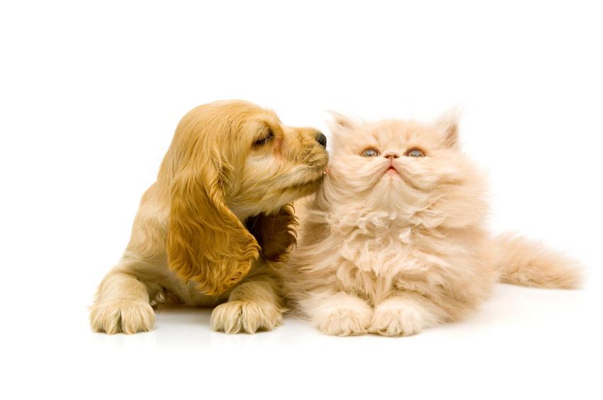 Pet_sitting_service