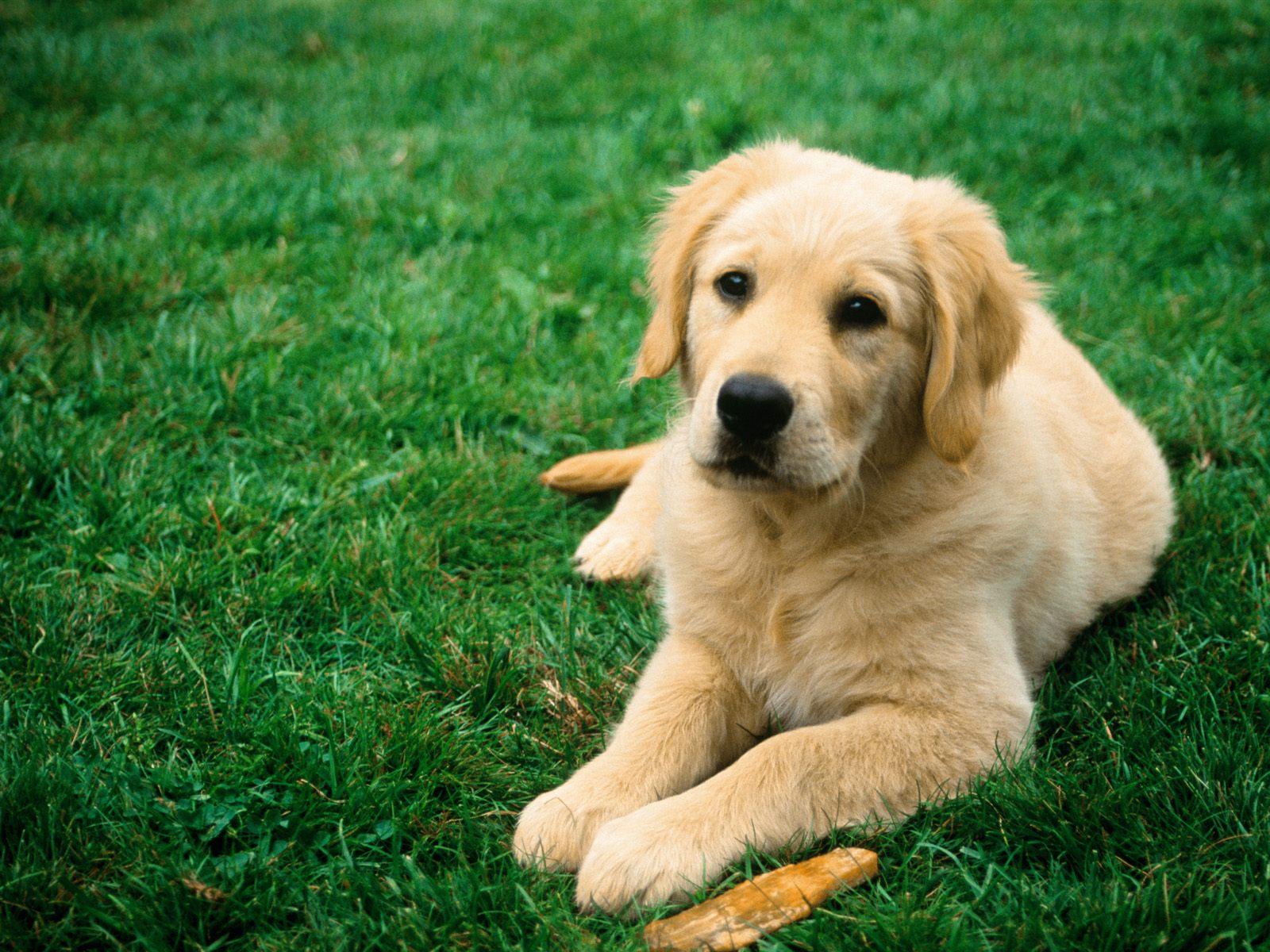sitting-dog