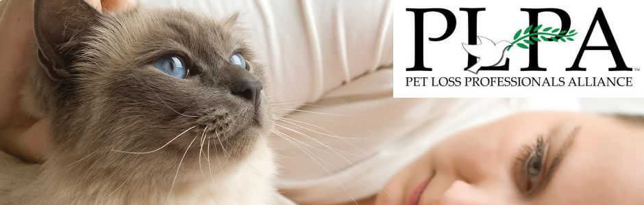 Blue eyed cat with blue eyed  caucasian woman caressing it lying in white bed.