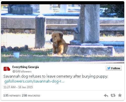 everything-georgia-grieving-dog