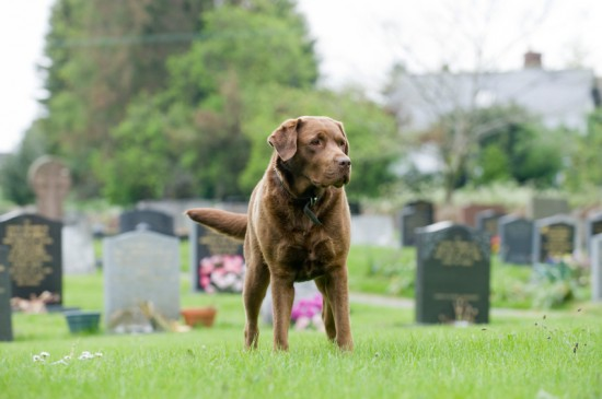 dog-cemetery