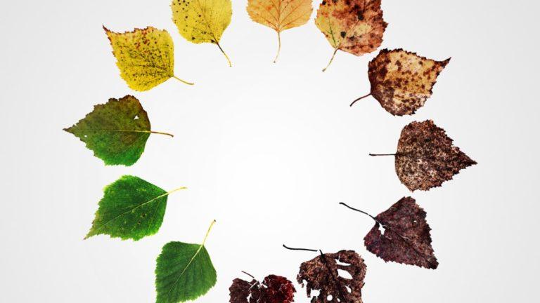 Alternate Endings image of leaves in a circle