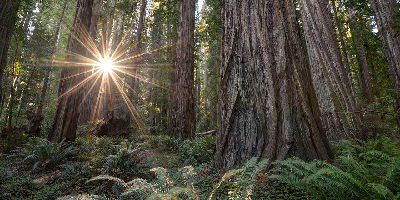 Better Place Redwood Forest