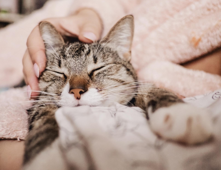 Cat Grief