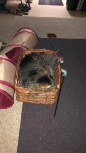 Mufasa the tabby cat sleeping in the memory basket